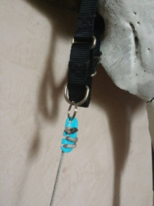 Lace Latch used to secure a dog collar